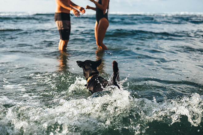 Dog jumping into sea | Balinese Beach Surf Elopement | Emily & Steve Photography