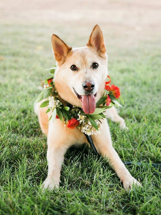 Dog with bouquet at wedding | Koi Art Style | Pearl Hsieh Photography