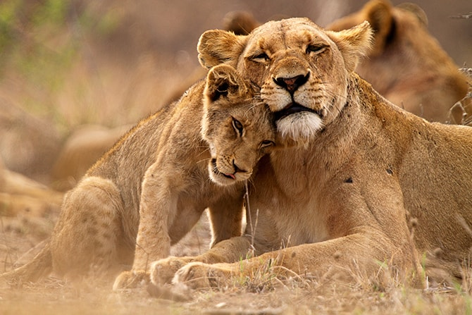 South Africa | Lonely Planet | Top 10 Budget Honeymoons