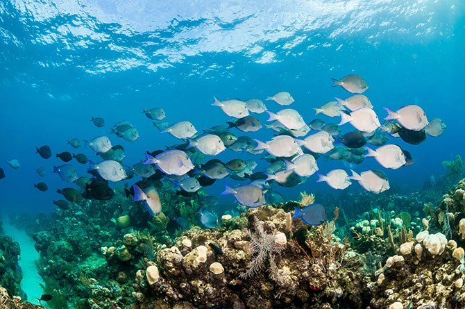 Hondrus Scuba Diving | Lonely Planet | Top 10 Budget Honeymoons