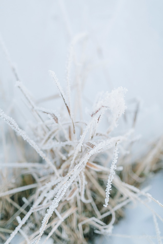 Frozen Grass | Swedish Winter Wedding Style Linda-Pauline Photo