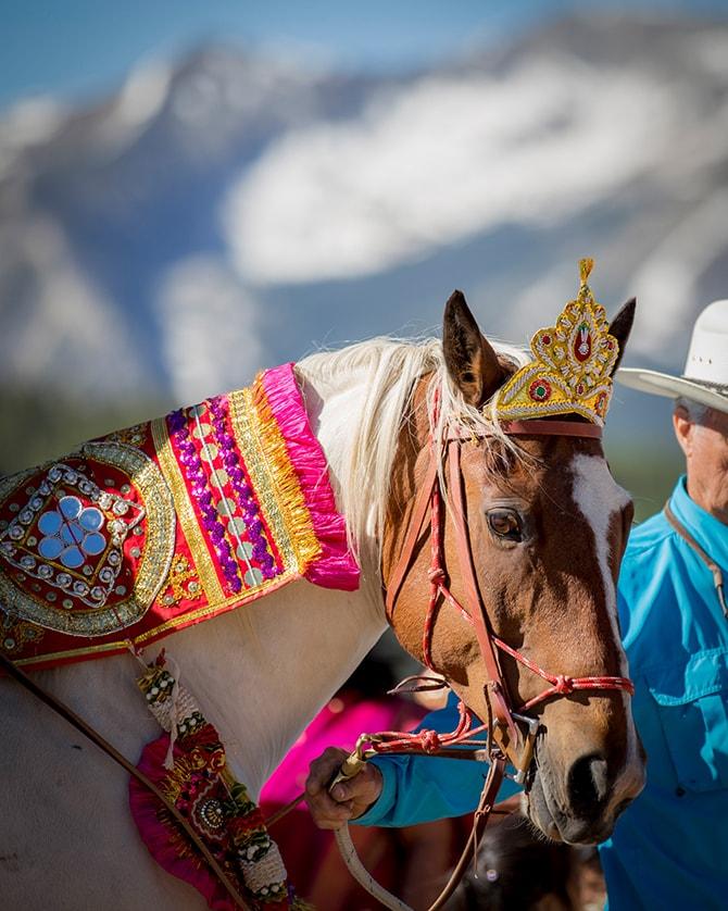 Horse at Hindu wedding | Traditional Hindu Wedding | Third Eye Photography