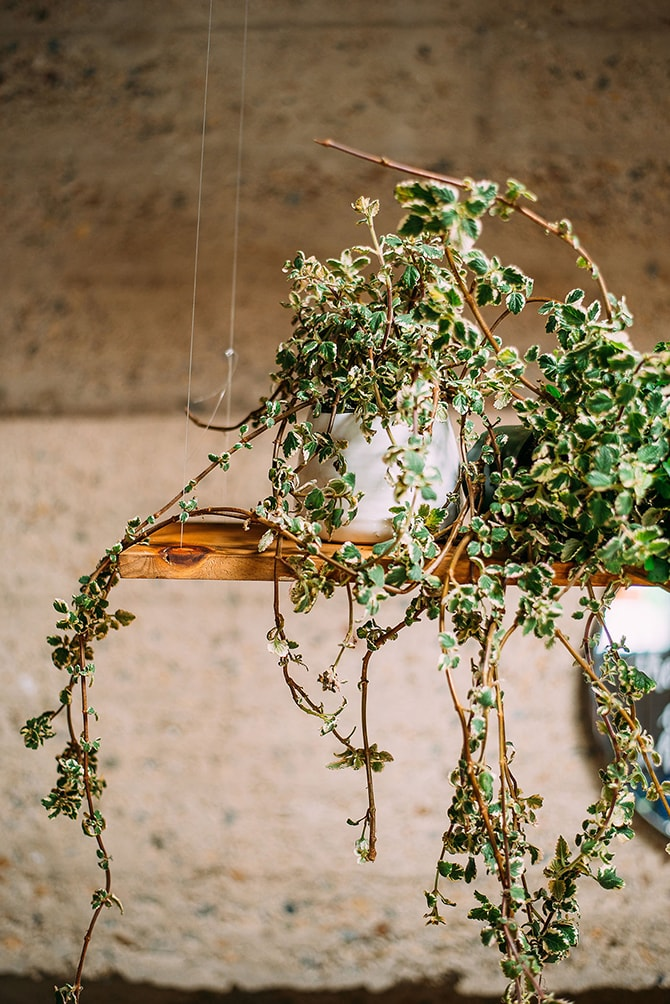Hanging plants | Hidden City Garden | Fogamp Dawn Photography