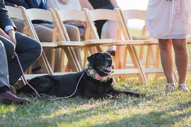 Dog at wedding | Coastal Fort Wedding in Rhode Island | Ellysia Francovitch Photography