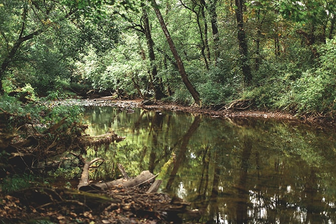 Beautiful river | Rustic Dreaming in Pembroke | Jasmine White Photography