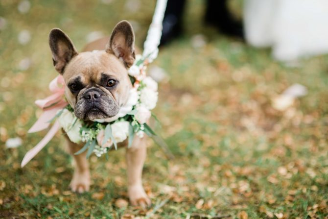 Dog at with wedding flowers